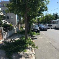 Καταγγελία αναγνώστη: Κλάδευαν τα δέντρα στην οδό Φιλίππου χωρίς να μετακινήσουν τα σταθμευμένα αυτοκίνητα!