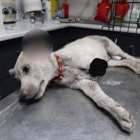 Η κτηνωδία της χρονιάς στην Ξάνθη: Ανατριχιαστικές εικόνες από την κακοποίηση σκύλου – Αμοιβή 2.000 ευρώ σε όποιον αποκαλύψει την ταυτότητα του δράστη