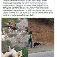 Μαζική δηλητηρίαση σκύλων από φόλες σε Σκλήθρο, Αετό και Νυμφαίο Φλώρινας