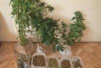 Σύλληψη 47χρονου σε περιοχή των Γρεβενών για καλλιέργεια δενδρυλλίων κάνναβης και κατοχή ναρκωτικών