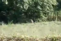 Δείτε βίντεο από την εμφάνιση λύκων στην περιοχή του εξωκλησίου της Παναγίας στην Κοζάνη