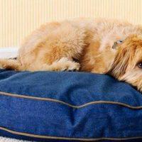 Φροντίζουμε τη στοματική υγιεινή του σκύλου μας