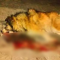 Έριξαν φόλες σε κεντρικό δρόμο στη Σιάτιστα – Ένας νεκρός σκύλος και ένας εξαφανισμένος ο απολογισμός