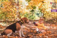 Τι προσφέρει η ύπαρξη ενός κατοικίδιου ζώου σε μία οικογένεια και πως επιδρά στη ζωή της οικογένειας και συγκεκριμένα του παιδιού;