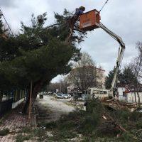 Έσπασαν κλαδιά από την χιονόπτωση στην Πτολεμαΐδα – Εργασίες απομάκρυνσης από το Δήμο Εορδαίας
