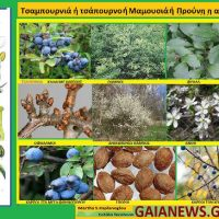 Φυτά στους αγρούς και τους κήπους της παλιάς Κοζάνης – Γράφει η Μάρθα Στ. Καπλάνογλου Γεωπόνος Τεχνολόγος