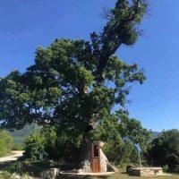 Η Δεντροκκλησιά του Αγίου Παϊσίου: Ένα διαφορετικό προσκύνημα προς τιμήν του Αγίου Παϊσίου σε χωριό της Κόνιτσας