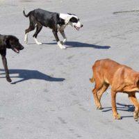 Καταγγελία οργανωμένης μεταφοράς αδέσποτων ζώων τα οποία εγκαταλείπονται στον Δήμο Εορδαίας – Αναφορές για μεταφορά από όχημα με κρατικές πινακίδες