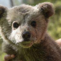 Νεαρό αρκουδάκι εγκλωβίστηκε σε αυλή οικίας στην Ομαλή του Δήμου Βοΐου