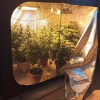 Βίντεο: Δύο συλλήψεις σε περιοχή της Φλώρινας για καλλιέργεια και κατοχή ναρκωτικών – Είχαν αναπτύξει σύστημα υδροπονικής καλλιέργειας δενδρυλλίων κάνναβης στο σπίτι τους