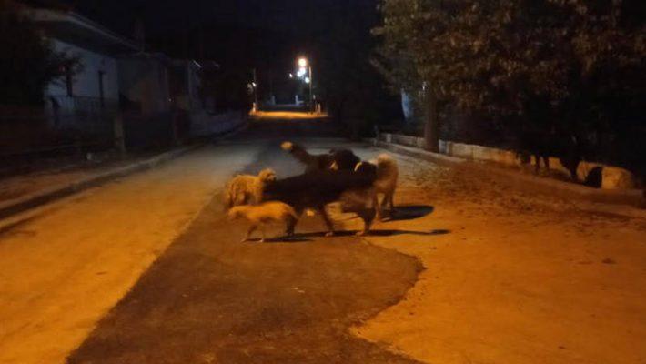Διαμαρτυρία κατοίκου του Δρεπάνου Κοζάνης για τα αδέσποτα: «Η κατάσταση έχει ξεφύγει – Ο Δήμος έχει αποτύχει στο θέμα των αδέσποτων»