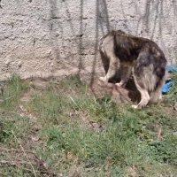 Καστοριά: Σκύλος σφηνώθηκε σε μαντρότοιχο – Απεγκλωβίστηκε με τη βοήθεια της Πυροσβεστικής