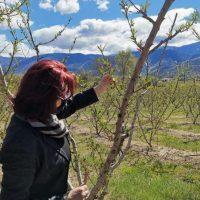 Η Π. Βρυζίδου για τις αποζημιώσεις των δενδροκαλλιεργητών της Π.Ε. Κοζάνης εξαιτίας του παγετού