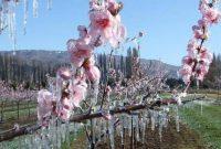 Το ΚΙΝΑΛ Κοζάνης για τη μη ένταξη των αγροτών της Ανατολικής Εορδαίας στην αναγγελία δηλώσεων για τον παγετό της άνοιξης