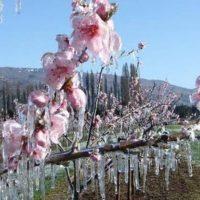 Κίνημα Αλλαγής Κοζάνης: Η ενίσχυση του ΕΛΓΑ Κοζάνης δεν πρέπει να καθυστερήσει ούτε μέρα – Ολοκληρωτικές καταστροφές σε δενδρώδεις καλλιέργειες