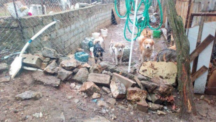Πανελλαδική Φιλοζωική Περιβαλλοντική Ομοσπονδία: «Βάρβαρες συμπεριφορές του Δήμου Σιάτιστας και πολιτών κατά αδέσποτων ζώων στη Σιάτιστα – Κόλαση και το παράνομο δημοτικό κυνοκομείο Σιάτιστας»
