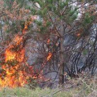 Υπό πλήρη έλεγχο φωτιά που εκδηλώθηκε στο Βέρμιο στα όρια των περιοχών Ερμακιάς- Αγίου Χριστοφόρου