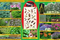 Εντομοαπωθητικά φυτά: Η οικολογική αντιμετώπιση των εντόμων – Της Γεωπόνου Μάρθας Καπλάνογλου