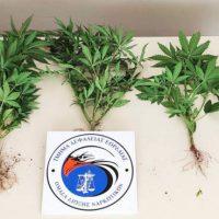 Συνελήφθη 51χρονος σε περιοχή της Πτολεμαΐδας για καλλιέργεια δενδρυλλίων κάνναβης