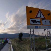 Εγνατία Οδός: Επιπλέον μέτρα μετά από τροχαίο με αρκούδα στον κάθετο άξονα Σιάτιστα – Κρυσταλλοπηγή