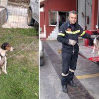 Επιχείρηση διάσωσης σκύλου στο Χρώμιο Κοζάνης: Έπεσε σε πηγάδι βάθους 20 μέτρων – Αναζητείται ο ιδιοκτήτης